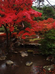 Kyoto - Chion-in Temple #kyoto #japan