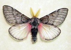 Fuzzy Furry Real Framed Pink Teddy Bear Moth. Own and love