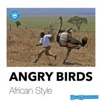 Angry Birds - African Style - Tier Witze