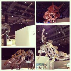 Dinosaur Fossils - Photo by dahinojosa