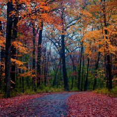 Forest Foliage #iPad #Air #Wallpaper