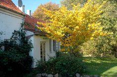 Malergården-efter-Swanerne