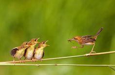 Spice birds spice birds spice birds! also known as the carolina wren C:
