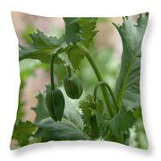 Oriental Poppy Buds Throw Pillow Art Prints For Home, Fine Art Prints, Zoom Conference Call, Aluminium Sheet, Got Print, Any Images, Art Techniques, Fine Art Photography, Bud