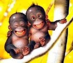 singes marrants - Recherche Google