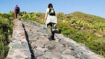 La Gomeran vaellusmatka | Aktiivilomat | Tjäreborg  #munloma Varanasi, Sidewalk, Country Roads, Sport, Deporte, Sidewalks, Sports, Pavement, Walkways