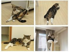 Typical cat