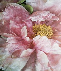 Peony #watercolor jd