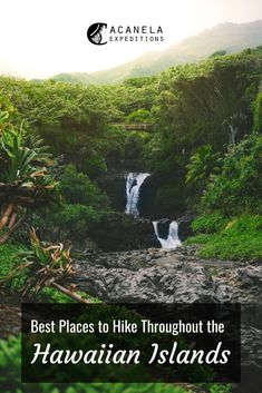 With a variety of trails, mountains, and parks to explore, it's near impossible not to find the perfect place to become one with nature on your hike. While these are some of the best places to hike in Hawaii, do your research to determine which spot will be most suitable for you. Some things to consider - elevation, length of the trail, forecast, etc. You want to ensure that you are fully prepared for your Hawaiian adventure.