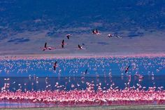 Lake Magadi, Kenya