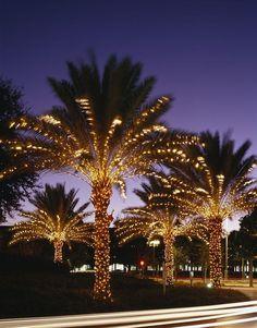 Ly Lights On The Palm Trees At Orlando S Peabody Hotel Christmas Yard Coastal