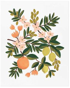 Rifle Paper Co. Citrus Floral Art Print - Trouva - This Citrus Floral illustrated Art Print by Rifle Paper Co, created from an original gouache painting by Anna Art And Illustration, Floral Illustrations, Art Floral, Vintage Floral Prints, Gouche Painting, Framed Art Prints, Wall Prints, Canvas Art, Artwork