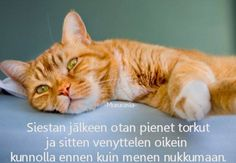 taking a nap Take A Nap, Humor, Funny, Animals, Finland, Animales, Animaux, Humour, Funny Photos