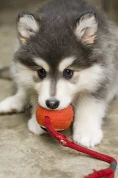 Don't worry, little guy. I would never ever ever ever take that ball away from you.