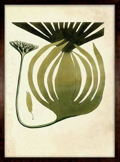 Originally compiled by British naturalist, William Harvey, these seaweed images are taken from his work called Psychologica Britannica that was commissioned in 1884.