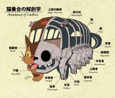 anatomy of catbus