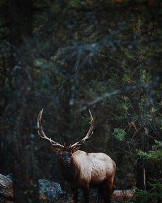 Super Safari, même si on n'a pas encore eu l'occasion de voir un ours  | Many Thanks #triplecreekranch for these two amazing days, That was wonderful ! #relaischateaux #celinemarks #visitmontana #MontanaMoment