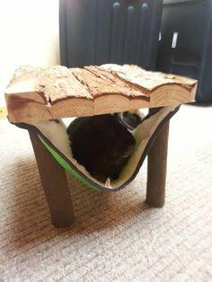 Cute guinea pig toy/hammock!