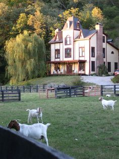 Bed And Breakfast | Property Photos Working goat farm is part of the Kentucky Farm stay program. Guests can assist the innkeepers in the care of the goats especially the baby goats (kids) in late spring and summer.,Blue Heron B and Retreat Center