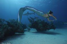 Linden Wolbert, professional mermaid, swimming with sharks Real Life Mermaids, H2o Mermaids, Mermaids And Mermen, Mermaids Exist, Mermaid Cove, Mermaid Art, Mermaid Lagoon, Realistic Mermaid Tails, Professional Mermaid