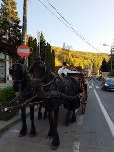 Autumn walk. Autumn Walks, Romania, Walking, Train, Horses, Animals, Animales, Animaux, Zug