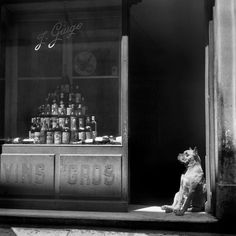 While the wine seller takes his siesta, his assistant takes his shift, photographed by Christer Strömholm in Paris, 1949.