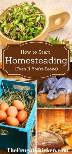 Awesome You can begin homesteading right now utilizing these easy hacks I've discovered over ...