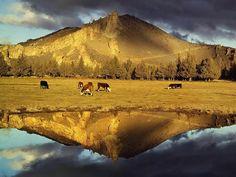 Oregon, State