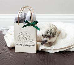 Sending Hedgehugs Giftbag - Hedgehog - Made with Cricut Explore - Add dimension to your home decor with this lovely dragonfly art. This project uses an image from the Cricut® Dimensional Paper Art digital cartridge. Damask Decor, Paper Art, Paper Crafts, Dragonfly Art, Craft Day, Cricut Cards, Card Tutorials, Scrapbook Cards, Scrapbooking