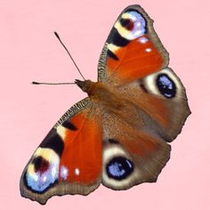schmetterling - Google-Suche Photographs, Google, Nature, Animals, Search, Animales, Animaux, Photos, Photograph