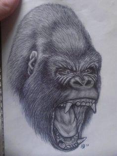 ... Gorillas on Pinterest | Gorilla tattoo Silverback gorilla and The