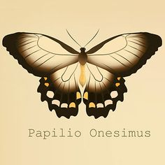 You Are Papilio Onesimus  You are a naturally helpful person, and you enjoy nurturing those around you. You sense what others need. You are quite gentle and sensitive. You may be easily wounded, but you can rise to the occasion when others need you.  You value beauty, and you try to have a personal environment that soothes your soul. You have an artist's eye.