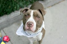 EDWARD - A1091402 - - Manhattan  Please Share:TO BE DESTROYED 10/02/16 **NEEDS A NEW HOPE RESCUE TO PULL** A volunteer writes: Edward, or Eeyore as I affectionately call him, is about as gentle and sweet as they come. Initially shy, he lingers at the back of his kennel like a shrinking violet, though I can tell right away that he's a sunflower in bloom. Sure enough, the moment he's leashed and his feet hit the ground, he shakes, shakes, shakes, and I watch as ea