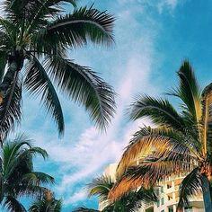 Can never ask for too many palm trees on #vacation! #emojisinthewild Photo by @jasonhreinhart at @hyattsarasota Hotels-live.com via https://instagram.com/p/6lVdaUljUh/