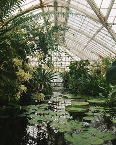 Would it be helpful if we shared how we keep our houseplants alive? The Effective Pictures We Offer You About Greenhouse drawing A quality picture can tell you many things. You can find Plant Aesthetic, Nature Aesthetic, Garden Care, Slytherin Aesthetic, Botanical Gardens, Houseplants, Greenery, Garden Design, Beautiful Places