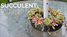 Create a Patio Succulent Garden