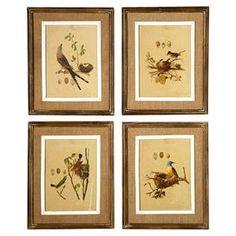 Nested Bird Framed Print (Set of 4)