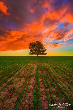 ~~Heavens Above ~ Barossa Valley, South Australia by Isaak Schiller~~