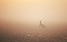 Finnish nature in mist – Johanna Amnelin – Melancholic photos