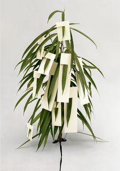 Ilona Plaum #plant #art