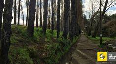 Austral University, Valdivia