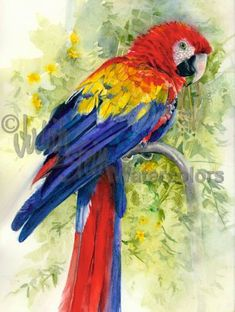 SCARLET MACAW Parrot Zoo Bird Watercolor Art Print