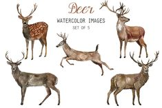 See all of our watercolor animals clipart here: Watercolor Deer Clipart. -Set of 5 transparent background PNG images. Watercolor Deer, Watercolor Images, Watercolor Texture, Watercolor Animals, Watercolour, Deer Illustration, Watercolor Illustration, Illustrations, Deer Drawing