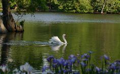Swan Lake Garden in Sumter, SC
