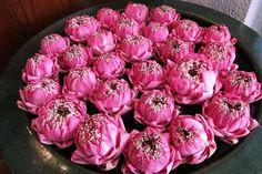 Lovely pink lotus flowers at @Four Seasons Hotel Bangkok.
