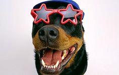 Still need a #patriotic #dog costume?  Check out the top 5 here!