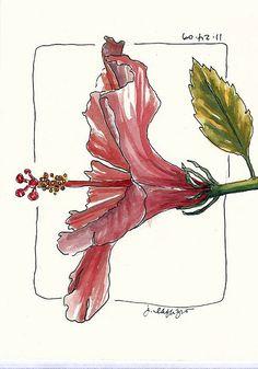 winery hibiscus | by janelafazio