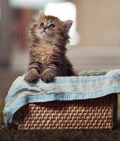 Adorable.. Cute Kitten | So Cute