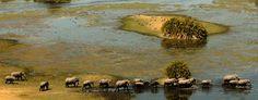 Botswana Safari Packages