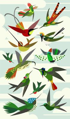 Scott Partridge | My take on a popular print, the 99th plate illustration from Ernst Haeckel's Kunstformen der Natur. Featured are Ruby-throated hummingbird, Horned Sungem, Crimson Topaz, Tufted Coquette, Red-tailed Comet, Sword-billed Hummingbird, Buff-tailed Sicklebill, Dot-eared Coquette, Hooded Visorbearer,  Booted Racket-tail